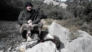 hunting in spain Iberian Mouflon