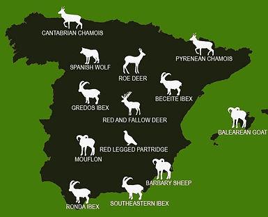 Hunting-species in Spain.jpg