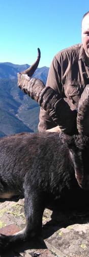 gredos-ibex-hunting-spain-big-6