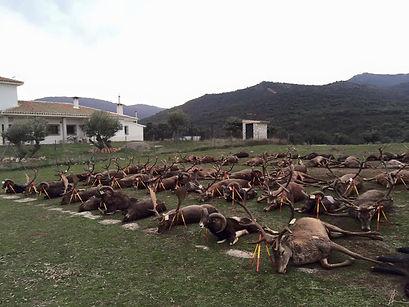 Загонная охота в Испании Монтерия, монтерея, охота на оленей, охота в испании охота на кабана, загон на кабана