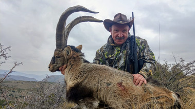 Охота на козерога Сиерра Невада в Испании с Lynx Tours 13