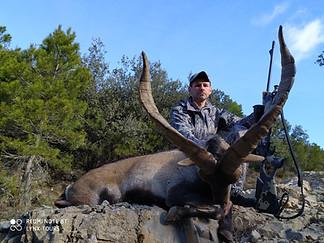 Beceite Ibex hunting