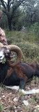 spain Iberian Mouflon hunting