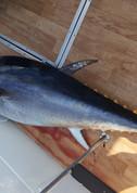 Ловля тунца в Испании
