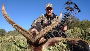 Охота на Бисайского козерога в Испании с Lynx Tours 12