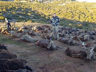 Monteria - Driven hunting