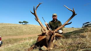 Iberian Red Deer in Spain best hunting a