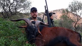 Охота в Испании на Балеарского козла Майоркого козла с Lynx Tours 13
