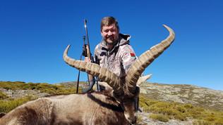 Охота на козерога гредос с Lynx Tours в Испании