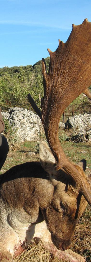 Охота на лань в Испании