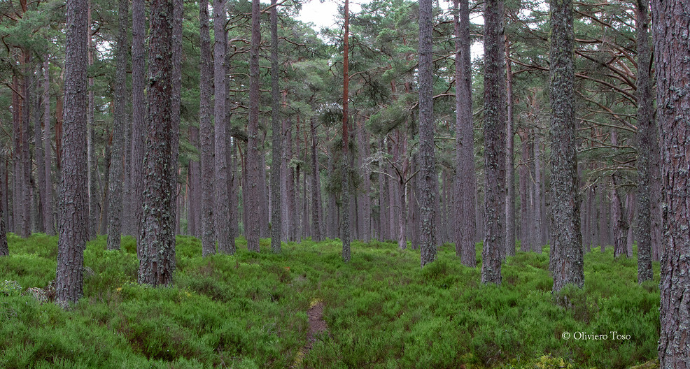 LOCH GARTEN FOREST