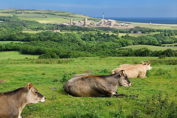 Return-land-cows.jpg
