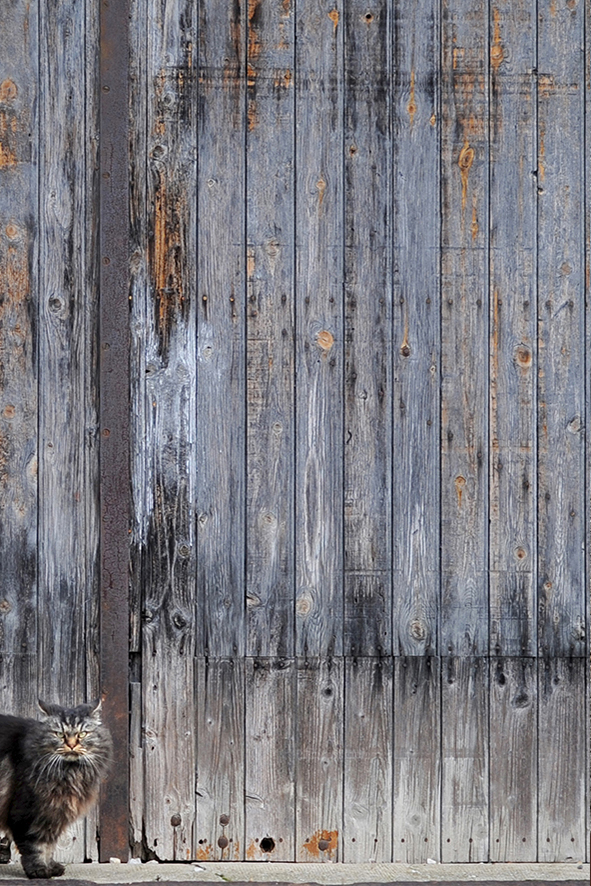VESTE COL FOURRURE -et tweed laine - violine-2