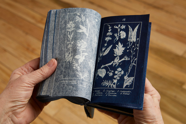 Penelope Stewart: Botanical Readings