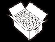Caja WilStain