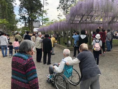 三大神社の藤まつり