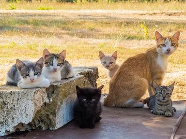 Cats family .jpg