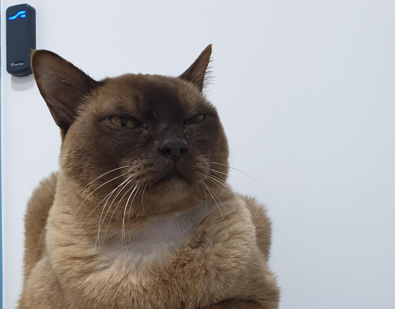 Relaxed Cat Vogue Vets & Wellness Centre
