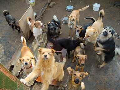 A lot of stray dogs in the shelter.jpg