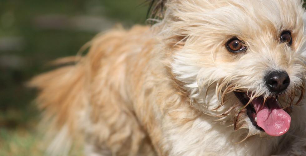 Pet Photography Willis Shoot 446.JPG