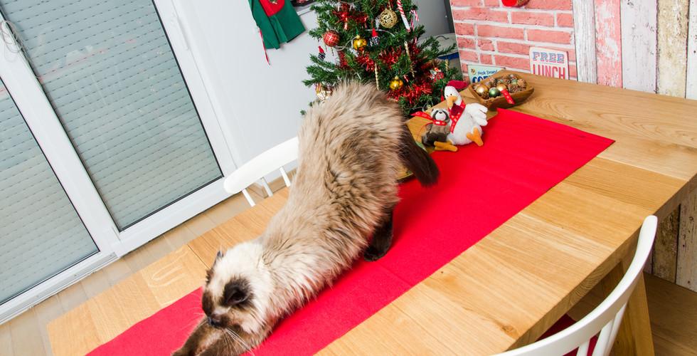 Christmas Cat Yoga.jpg