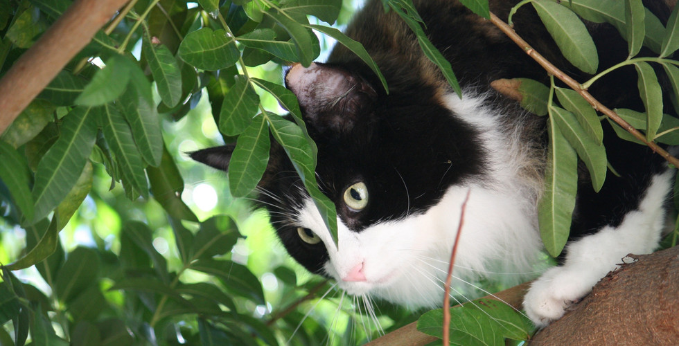 Pet Health & Wellbeing