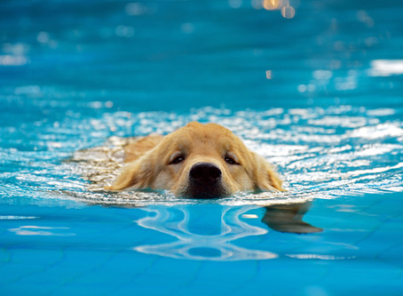 Puppy & Small Breed Swimming Lessons