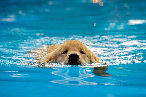 Puppy Swim Class.jpg