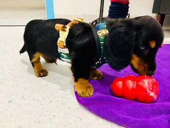 Puppy School Vogue Vets & Wellness Centr