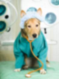 Dog surgeon, veterinary surgeon, surgery, operation, theatre light, gown,