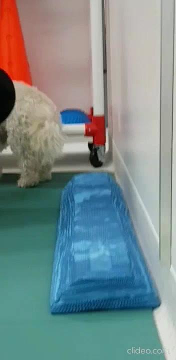 animal-gym-vogue-vets-and-wellness-centr