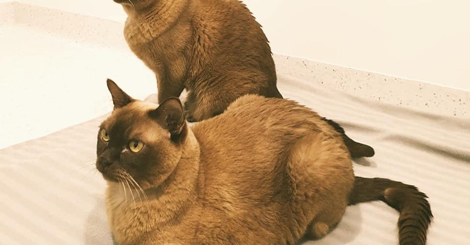 Cat Physio Perth_edited.jpg