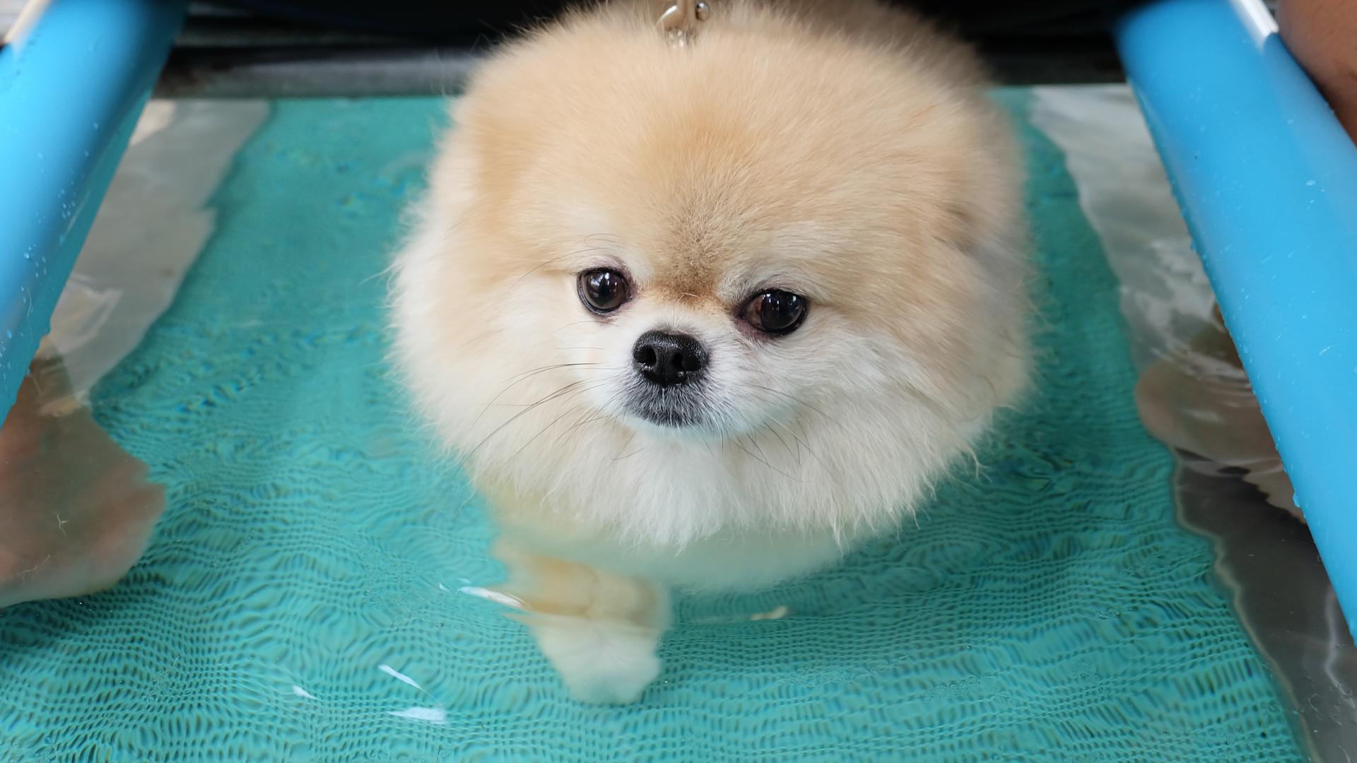 Adorable dog walks in underwater treadmi