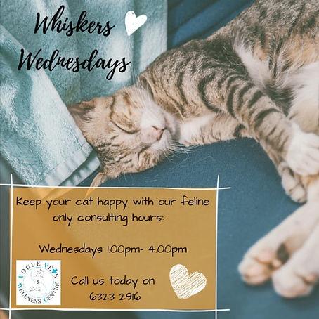 Whiskers Wednesdays.jpg