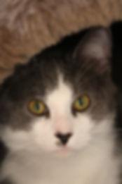 Pet Health, Vaccination, Titre Test, Microchip, Dental program, Senior program, cat health, dog health