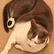 Animal physio perth assisi loop