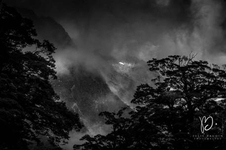 Brume dans les arbres