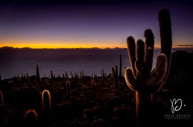 Cactus millénaire sur l'île d'Incahuasi