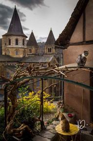 Les chats aux clochers