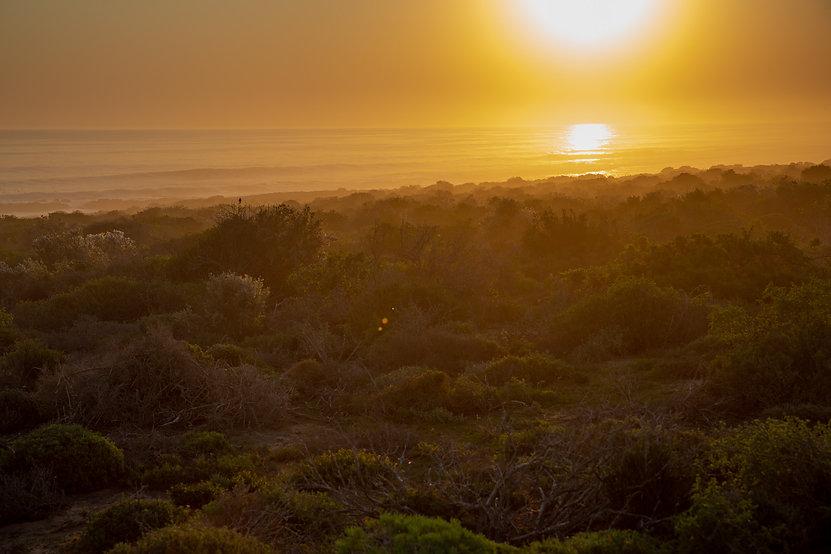 South_Africa_B18A8172_©Sacha_Specker.jpg