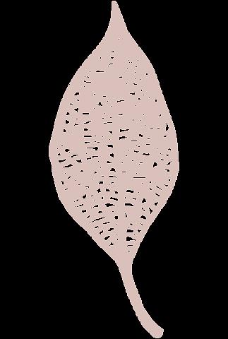 Skeleton leaf.png