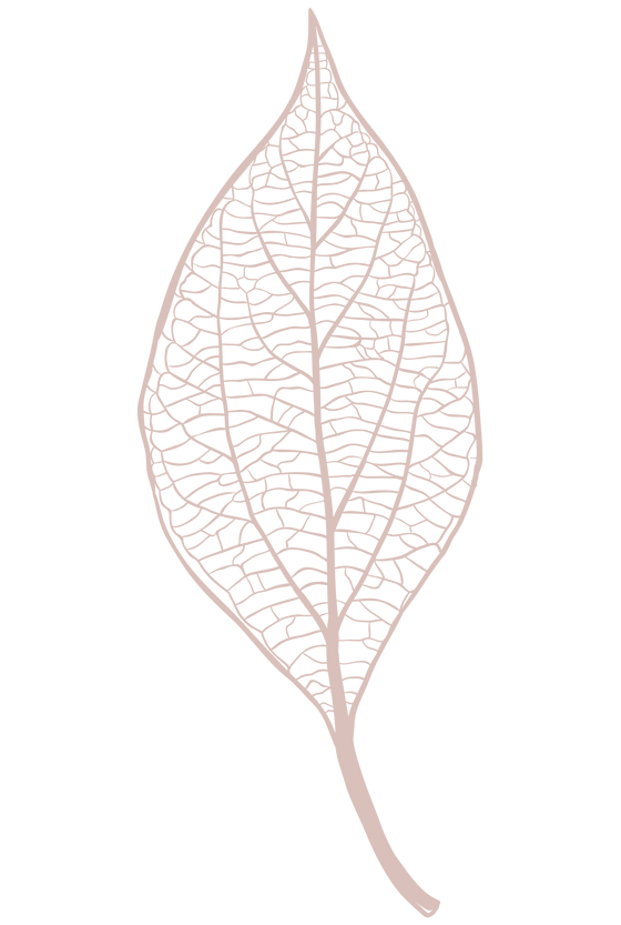 Skeleton leaf.png