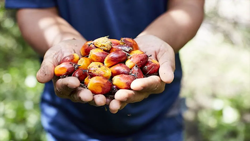palm oil, sustainable, agriculture