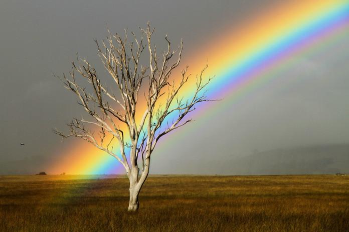 Rainbow Birds.jpg