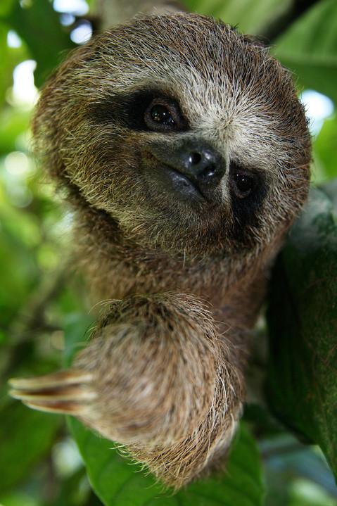 sloth_web_1500.jpg