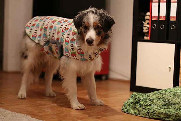 hundebademantel-bild.jpg