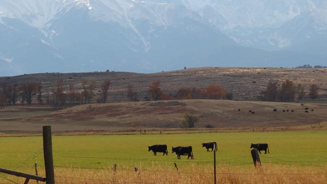Farm Families and Their Land