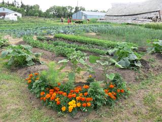 Gardens in full glory.