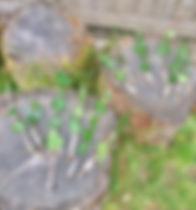 Nature wands.jpg