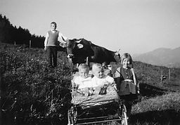 Die Kuh hat früher mit auf das Familienfoto gehört